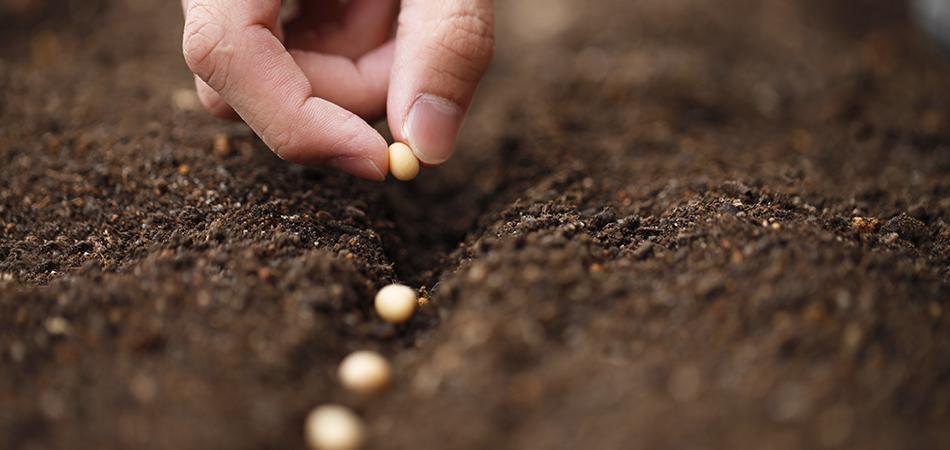 Selecione a semente